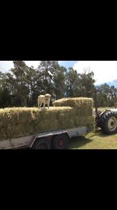 Small Square Hay Bales Bairnsdale East Gippsland Preview