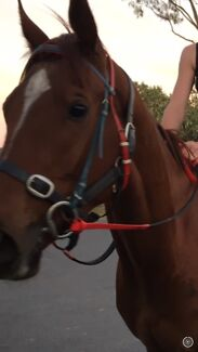 Wanted: ***STOLEN*** Bridle and Saddle Pad