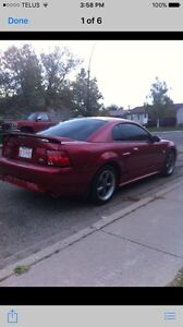 2004  40th anniversary GT mustang