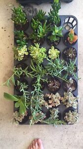 Succulents Bunbury Bunbury Area Preview