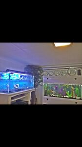Aquarium sans couvercle