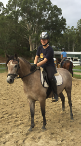 STUNNING PERFORMANCE PONY Carbrook Logan Area Preview
