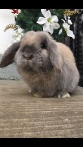 Beautiful bunny looking for new home