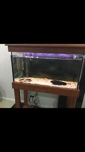 Fish Tank Wiley Park Canterbury Area Preview