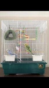 2 Budgies and a cage w/ accessories