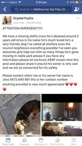 LOST/STOLEN MALE STAFFY CROSS Noble Park North Greater Dandenong Preview