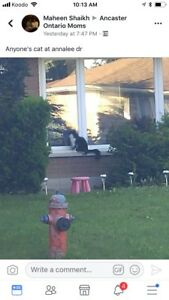 Sighting of a black and white cat