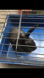 Rabbit Leppington Camden Area Preview