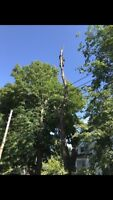 Tims Tree & Limb Removal, Stump Grinding & Chipping Services