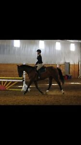 2008 Warmblood Mare by Eastern Ruler