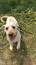 Dog walking and pet care Ngunnawal Gungahlin Area Preview