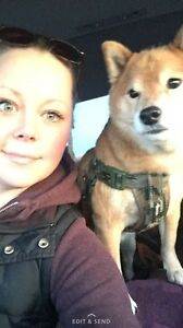 Airdrie animal services and house sitting