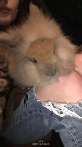 SWEETEST BUNNY EVER