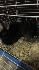 Rabbits for sale! Everything included!
