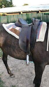 Mal Fishenden Stock Saddle $1500 ono Tamworth Tamworth City Preview