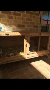 2 female Guinea pigs Joondalup Joondalup Area Preview