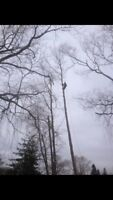 Tree & Limb Removal, Chipping & Lot Clearing Insured Free Quotes