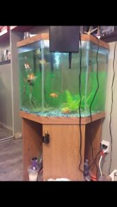 55 gallon corner tank with stand and light
