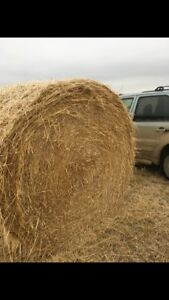 Hay/Straw