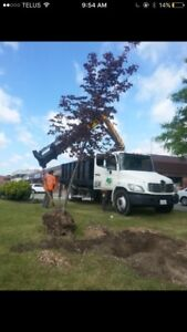 Trees , shrubs , planting & landscaping services!