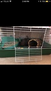 Bunny cage and all supplies