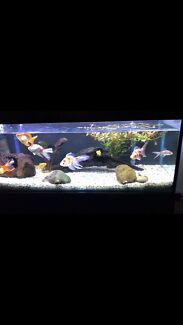 Fish tank for sale with large fish