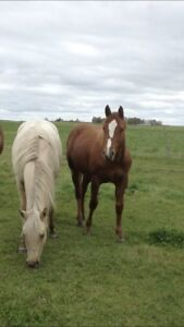 Pair of coming 2 year olds