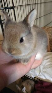 BABY RABBITS FOR ADOPTION
