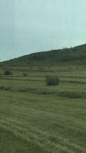 Buying hay in the peace river district