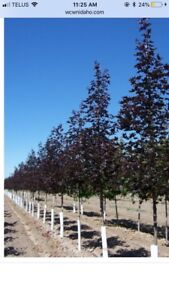**Fall Sale** Trees , Shrubs,Planting, Landscaping.,