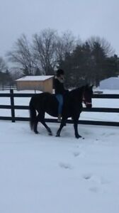 Horseback in the snow / Equitation Hiver