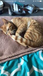 Free kitten need gone asap Blacktown Blacktown Area Preview