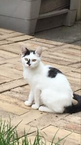 Free cats Broadmeadows Hume Area Preview