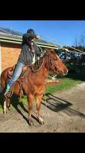 Welsh pony for sale Cardinia Area Preview