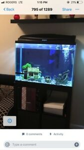 Aquarium Fish Tank 37 Gallon