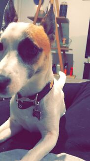 Wanted: Wanting A Best Friend For Our Dog