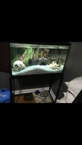 Fish tank with fish and all acessories