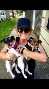 PROFESSIONAL DOG WALKER - EASTERN SUBURBS Bondi Eastern Suburbs Preview