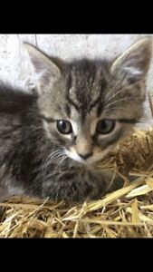 Kittens for sale! Need safe home ASAP