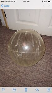 Large rodent exercise ball