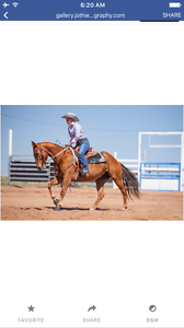 Horse Riding Lessons Tumut Tumut Area Preview