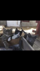 Kittens for sale! Need safe home ASAP!