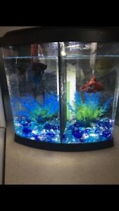 Divided fish tank 2 betta included