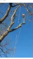 Tree Removal 5193294416