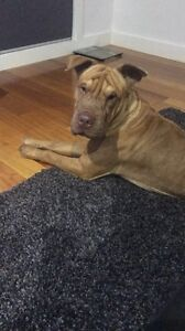 Lost Dog Brooklyn Brimbank Area Preview