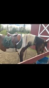 Looking to rent farm or place to board 3 horses cash & trade