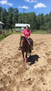 Young Barrel Prospect/Patterned Horse