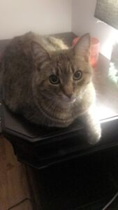4 year old spayed adult female cat to good home