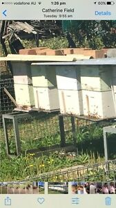 Beehives with honey Bringelly Camden Area Preview