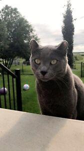 Lost male cat :(